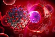 Újszerű gondolatok: A köldökzsinór eredetű őssejtek hozzájárulhatnak a koronavírus fertőzés gyógyításához?